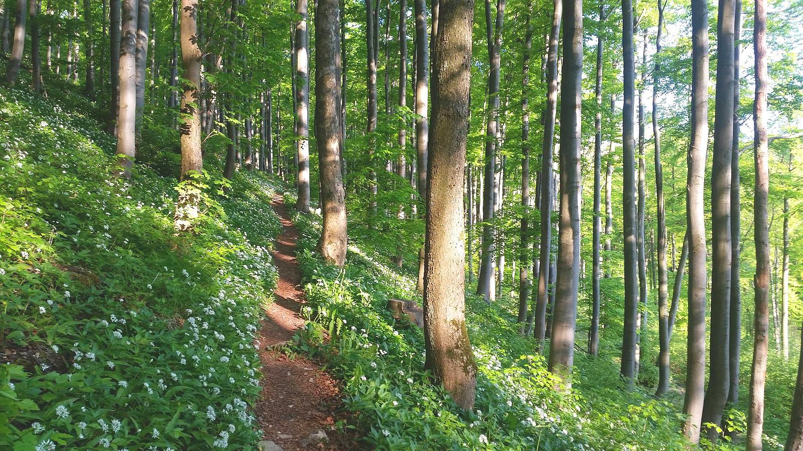 ein Rhöner Trail