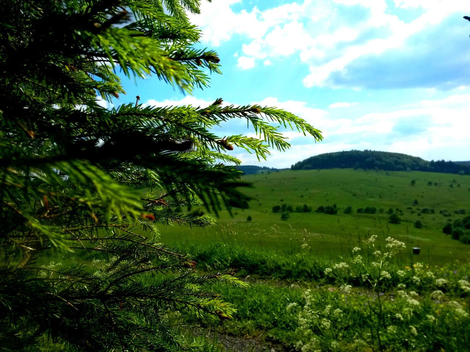 sattes Grün in den Hochlagen der Rhön