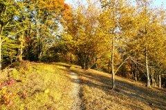 viel Flow auf Mountainbike Tour im fränkischen Saaletal
